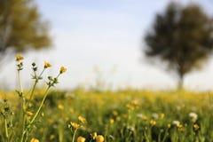 Flores salvajes en campo Foto de archivo libre de regalías