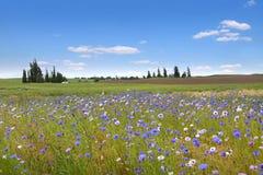 Flores salvajes en campos de trigo fotografía de archivo
