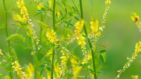 Flores salvajes en día ventoso soleado metrajes