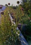 Flores salvajes en el amanecer imagen de archivo libre de regalías