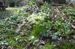 Flores salvajes en el arbolado Fotos de archivo libres de regalías