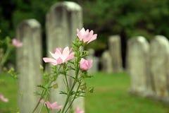 Flores salvajes en el cementerio imagen de archivo