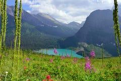 Flores salvajes en el rastro al glaciar de Grinnell y el lago en Parque Nacional Glacier Foto de archivo