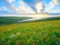 Flores salvajes en la broma Cornualles de Porth Imágenes de archivo libres de regalías