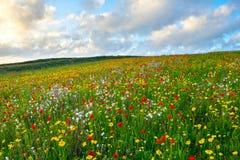 Flores salvajes en la broma Cornualles de Porth Fotografía de archivo libre de regalías