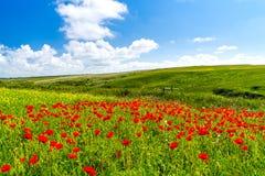 Flores salvajes en la broma Cornualles de Porth Fotografía de archivo