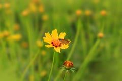 Flores salvajes en la hierba Fotografía de archivo libre de regalías