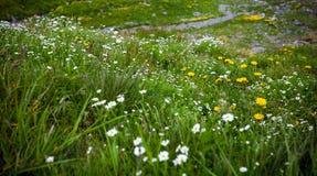 Flores salvajes en la montaña de Fagaras Imagen de archivo libre de regalías