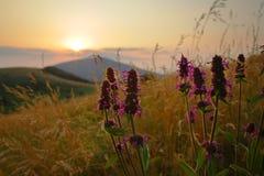 Flores salvajes en la puesta del sol Imagen de archivo libre de regalías