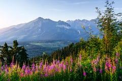 Flores salvajes en la puesta del sol en las montañas polonia Fotografía de archivo