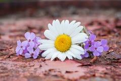 Flores salvajes en la superficie de metal sucia Fotos de archivo