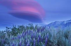 Flores salvajes en montañas Foto de archivo libre de regalías