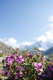 Flores salvajes en montañas Imagen de archivo