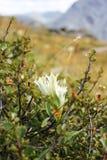 Flores salvajes en montañas Imágenes de archivo libres de regalías