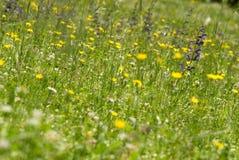Flores salvajes en prado Fotografía de archivo libre de regalías