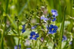 Flores salvajes en prado Foto de archivo libre de regalías