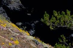 Flores salvajes en un acantilado con un árbol de pino, contra sombras oscuras imagenes de archivo