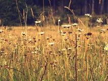 Flores salvajes en un campo Fotografía de archivo libre de regalías