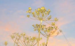Flores salvajes en un campo en luz del sol Fotografía de archivo libre de regalías