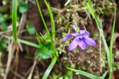 Flores salvajes en un d?a nublado imagen de archivo libre de regalías