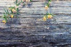 Flores salvajes en un tronco de árbol sin la corteza Fotografía de archivo
