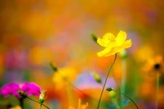 Flores salvajes en Yangshuo China imagen de archivo libre de regalías