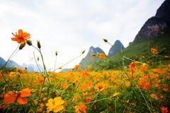 Flores salvajes en Yangshuo China imagen de archivo