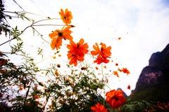 Flores salvajes en Yangshuo China fotos de archivo