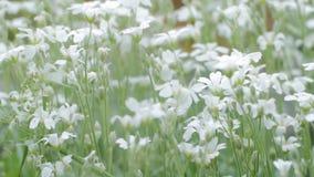 Flores salvajes hermosas almacen de metraje de vídeo