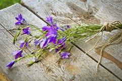 Flores salvajes hermosas Imagen de archivo libre de regalías