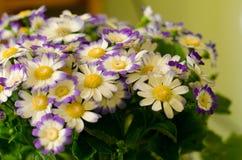 Flores salvajes hermosas Fotos de archivo