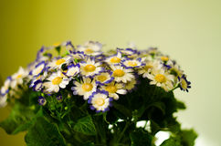Flores salvajes hermosas Imagen de archivo