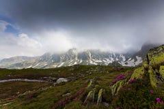 Flores salvajes hermosas en altas montañas Fotos de archivo