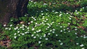 Flores salvajes hermosas en bosque almacen de video