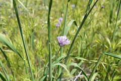 Flores salvajes hermosas - una parte de los fen?menos del superbloom en la cordillera de Walker Canyon cerca del lago Elsinore fotografía de archivo