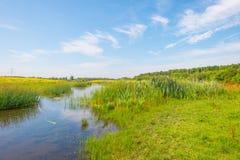 Flores salvajes a lo largo de un lago en verano Foto de archivo