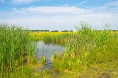 Flores salvajes a lo largo de un lago en verano Imagenes de archivo
