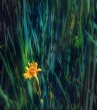 Flores salvajes Macro Imagen de archivo libre de regalías