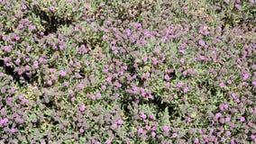 Flores salvajes mediterráneas en primavera almacen de video