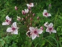 Flores salvajes Muy bonito Fotos de archivo