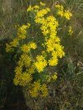 Flores salvajes Muy bonito Imagen de archivo libre de regalías