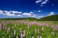 Flores salvajes púrpuras, cielo azul profundo y montañas Imagen de archivo