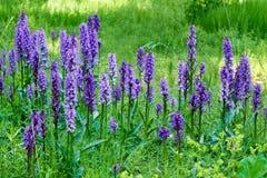 flores salvajes púrpuras para las abejas Imagenes de archivo