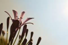 Flores salvajes púrpuras románticas hermosas contra el cielo azul claro Foto de archivo libre de regalías