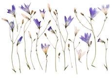 Flores salvajes presionadas Fotos de archivo