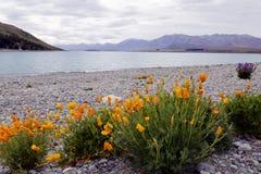 Flores salvajes que florecen a través del lago Tekapo Imagen de archivo