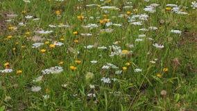 Flores salvajes que se mueven en el viento