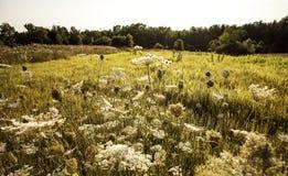Flores salvajes que se separan a través de un campo de Michigan Fotos de archivo