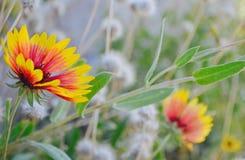 Flores salvajes reales en naturaleza Imagenes de archivo