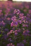 Flores salvajes rosadas macras Imágenes de archivo libres de regalías